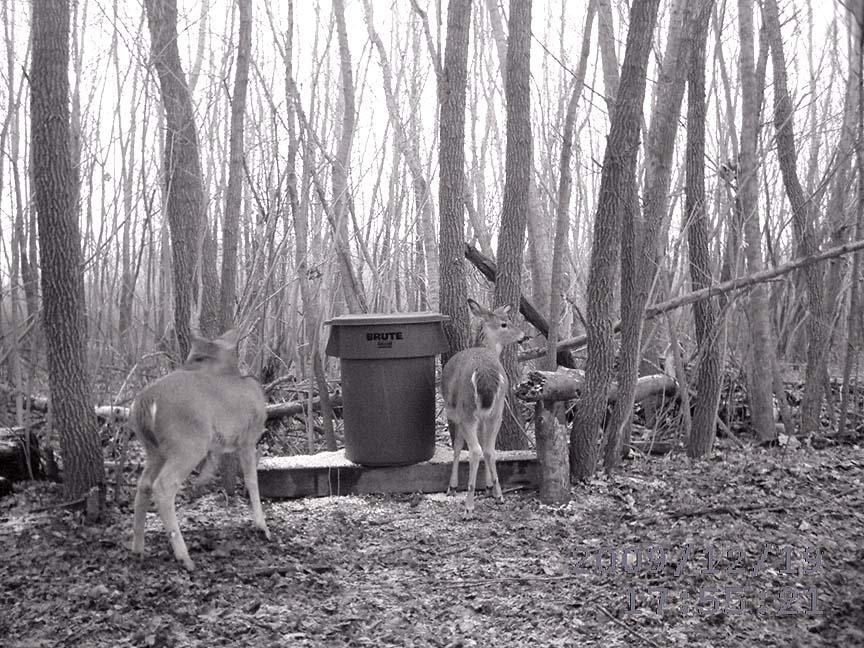 Homemade feeders and feeding deer ?